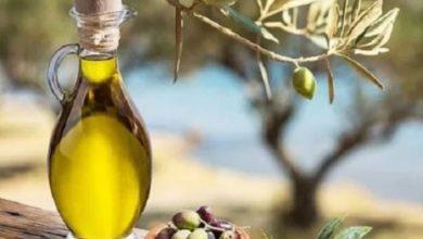 صورة فوائد ورق الزيتون للجسم والبشرة
